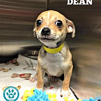 Adopt A Pet :: Dean - Kimberton, PA