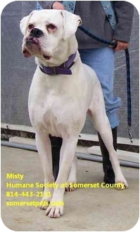 Boxer Mix Dog for adoption in Somerset, Pennsylvania - Misty