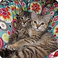 Adopt A Pet :: Kovu and Kiara - Owosso, MI