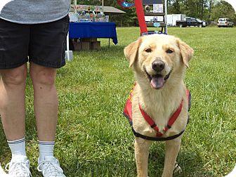 Golden Retriever Mix Puppy for adoption in Scotland Neck, North Carolina - Jessie