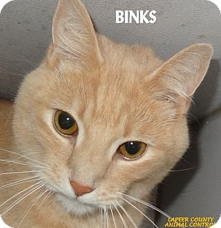 Domestic Shorthair Cat for adoption in Lapeer, Michigan - BINKS--NEUTERED MALE!