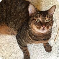 Adopt A Pet :: Vie - Encinitas, CA