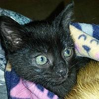 Adopt A Pet :: Batman - Bethpage, NY
