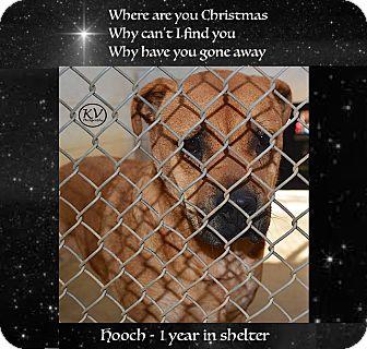 Bullmastiff/Shar Pei Mix Dog for adoption in Sautee, Georgia - Hooch