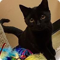 Adopt A Pet :: Bruce Wayne - McDonough, GA