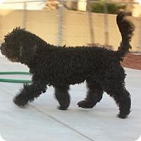 Adopt A Pet :: Waa Waa, handsome handsome boy - Corona, CA