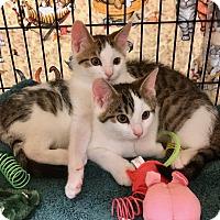 Adopt A Pet :: Finn and Fritz - Colmar, PA