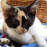 Adopt A Pet :: Thumbellina - Kalamazoo, MI