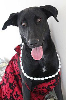 Labrador Retriever Mix Dog for adoption in Cuero, Texas - JoJo