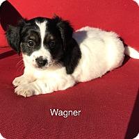 Adopt A Pet :: Wagner - Brea, CA