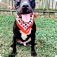 Adopt A Pet :: Jack Ryan - Durham, NC