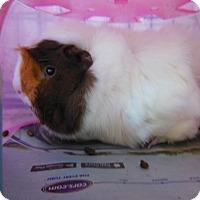 Adopt A Pet :: Charlie - Olivet, MI