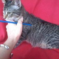 Adopt A Pet :: Wisteria - Kinston, NC