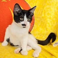 Adopt A Pet :: Diva - Muskegon, MI