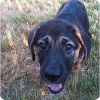 Adopt A Pet :: Drake - Arlington, TX
