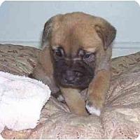 Adopt A Pet :: Mel - Evansville, IN