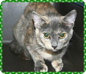 Calico Cat for adoption in Marietta, Georgia - SHASTA