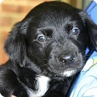 Adopt A Pet :: Paul - Knoxville, TN