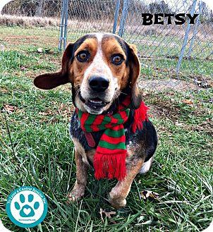 Beagle/Australian Cattle Dog Mix Dog for adoption in Kimberton, Pennsylvania - Betsy