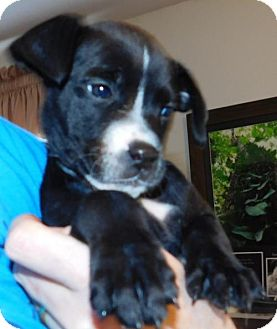 Boxer Mix Dog for adoption in Von Ormy, Texas - Letty