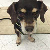Adopt A Pet :: Rudy - Lockhart, TX