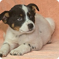 Adopt A Pet :: Tex - Elmwood Park, NJ