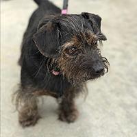 Adopt A Pet :: Leia - Natchitoches, LA