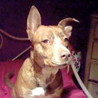 Adopt A Pet :: Star - Benton, PA