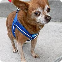 Adopt A Pet :: Tippy - Umatilla, FL