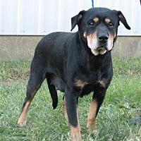 Adopt A Pet :: Leila - Nashua, NH