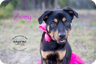 Mixed Breed (Medium)/Hound (Unknown Type) Mix Dog for adoption in Summerville, South Carolina - Zoey