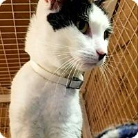 Adopt A Pet :: Yin - Plainville, MA