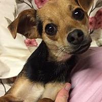 Adopt A Pet :: Bandit - Kansas city, MO