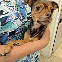Adopt A Pet :: Mama Paulie - Middletown, NY
