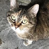 Adopt A Pet :: Chloe - Santa Clarita, CA