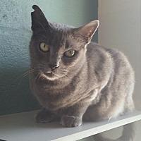 Adopt A Pet :: Greyson - Sarasota, FL