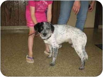 Blue Heeler Mix Dog for adoption in Plainfield, Illinois - Garfield
