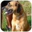 Photo 2 - German Shepherd Dog/Rhodesian Ridgeback Mix Dog for adoption in Afton, Tennessee - Daisy