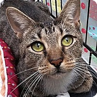 Adopt A Pet :: Catherine - Brooklyn, NY