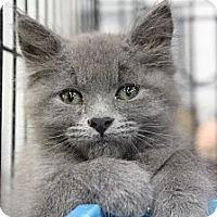 Adopt A Pet :: Blake - Santa Monica, CA
