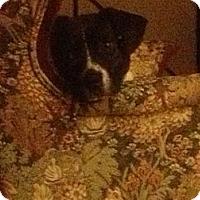 Adopt A Pet :: Bandit - McKeesport, PA
