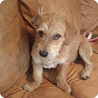 Adopt A Pet :: Stewie - Lynnville, TN