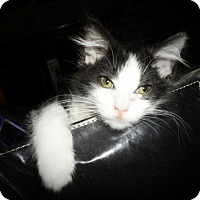 Adopt A Pet :: Cindy - Xenia, OH