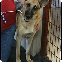 Adopt A Pet :: Heidi - Rockwall, TX