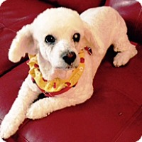 Adopt A Pet :: LILY BETH - Melbourne, FL