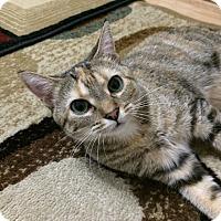 Adopt A Pet :: Hera - Milwaukee, WI