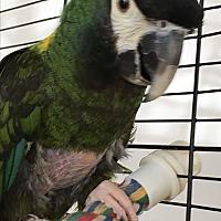 Adopt A Pet :: Vacca - Punta Gorda, FL