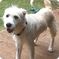 Adopt A Pet :: Gigi - Woonsocket, RI