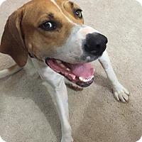 Adopt A Pet :: Delana - Alpharetta, GA