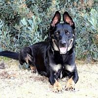 Adopt A Pet :: Kasey - San Diego, CA